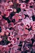 Fotografie full frame image of purple lilac background