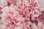 celý rám obrazu textury květ růžové sakura