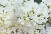 Fotografie full frame image of white lilac background