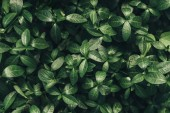 full frame image of green leaves background