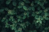 teljes méretű kép, zöld levelek, fehér virágok kis háttérzenével