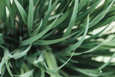 full frame image of grass background