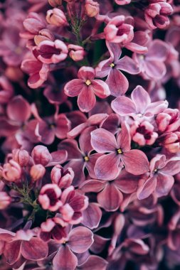 full frame image of purple lilac background