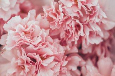 full frame image of pink sakura bloom texture