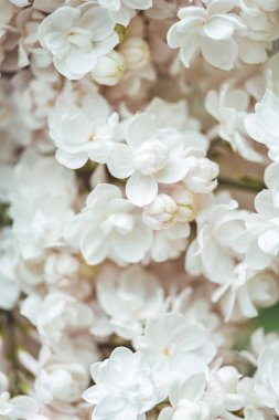 full frame image of white terry lilac background
