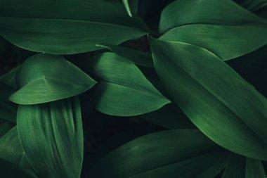 full frame image of plant leaves background