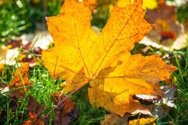 Autumn nature background.