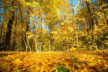 Autumn nature landscape outdoor.
