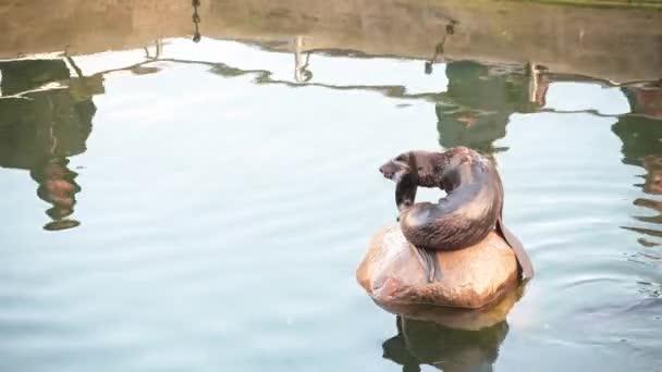 Eine junge Robbe sitzt auf einem Stein mitten im Wasser.