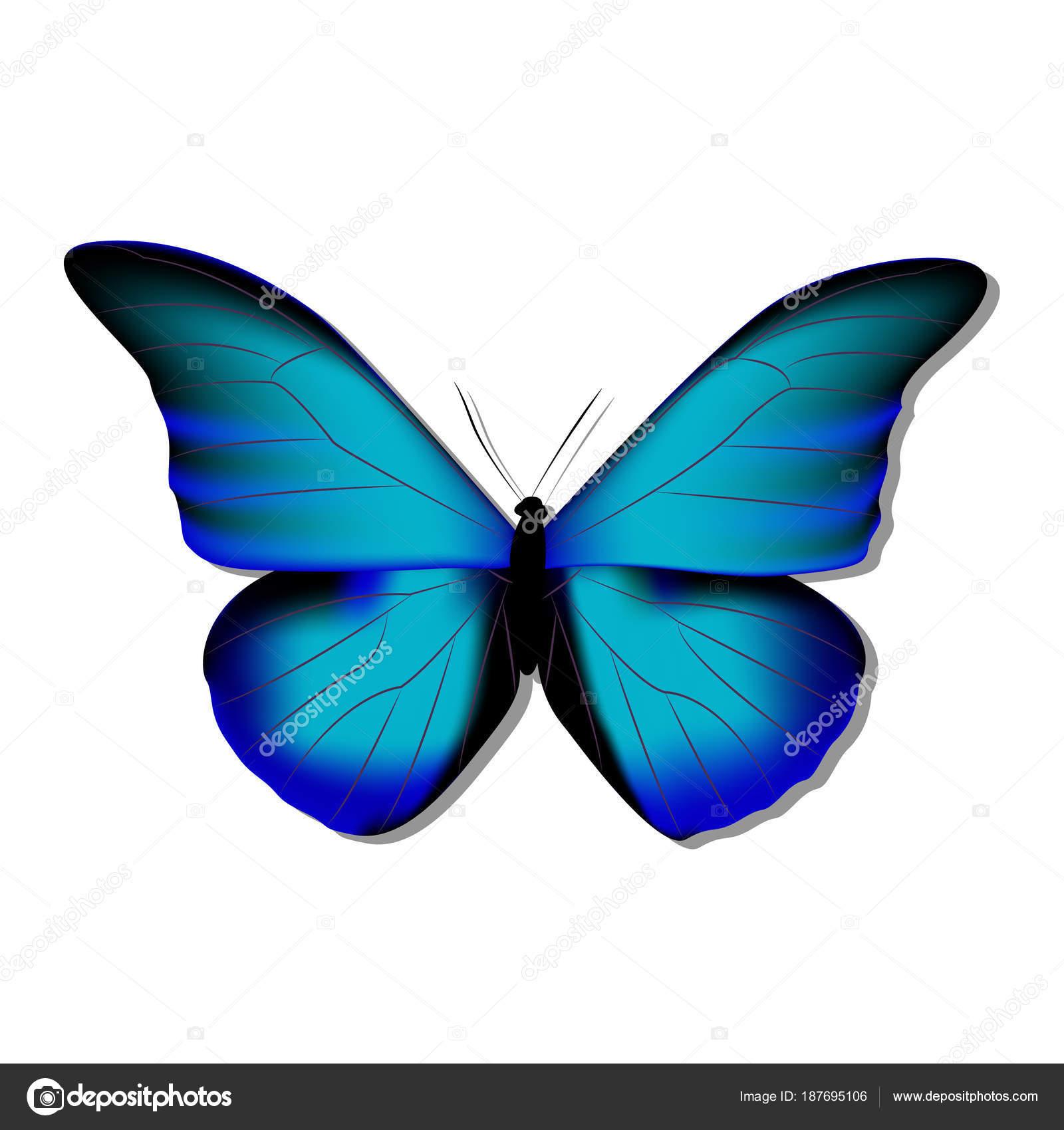 Morpho Morph Farfalla Blu Su Sfondo Bianco Con Ombra Gr