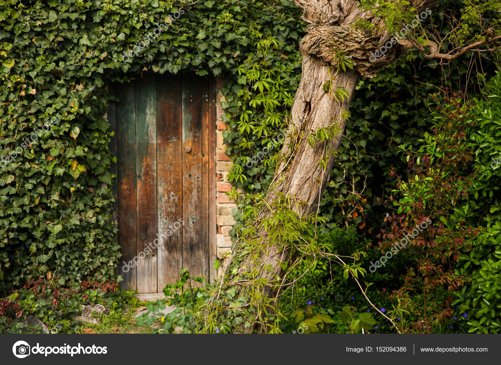Romantico Vecchio Giardino Cancello Di Legno All Aperto Circondata
