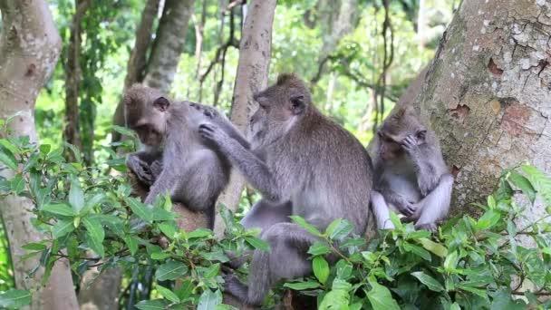 Monkey family at sacred monkey forest Ubud Bali Indonesia