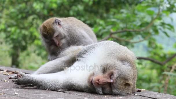 opičí rodina na sacred monkey forest ubud bali Indonésie