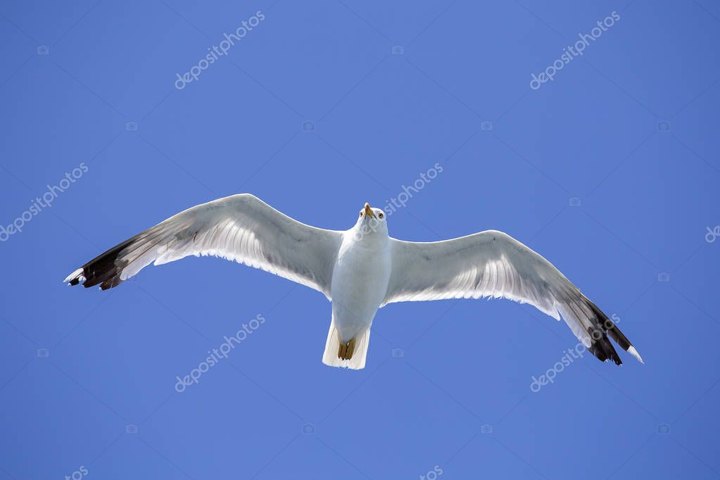 Portrait of a gull over the sea in front of Istanbul, Turkey