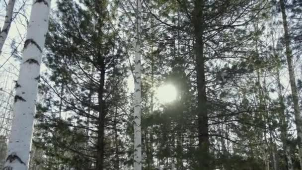 slunce svítí skrz stromy