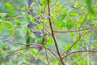 Beautiful Colorful parrots