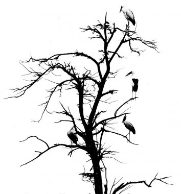 tree with birds on branches