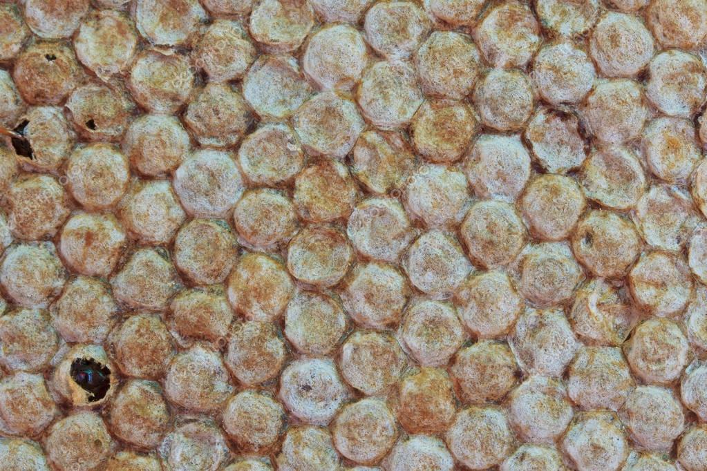 Orange bee honeycombs