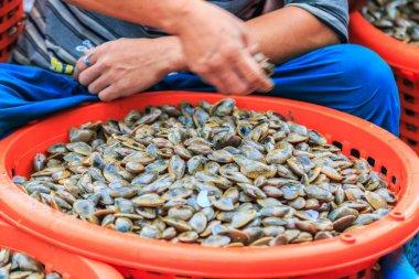 Shellfish on fishing vessels