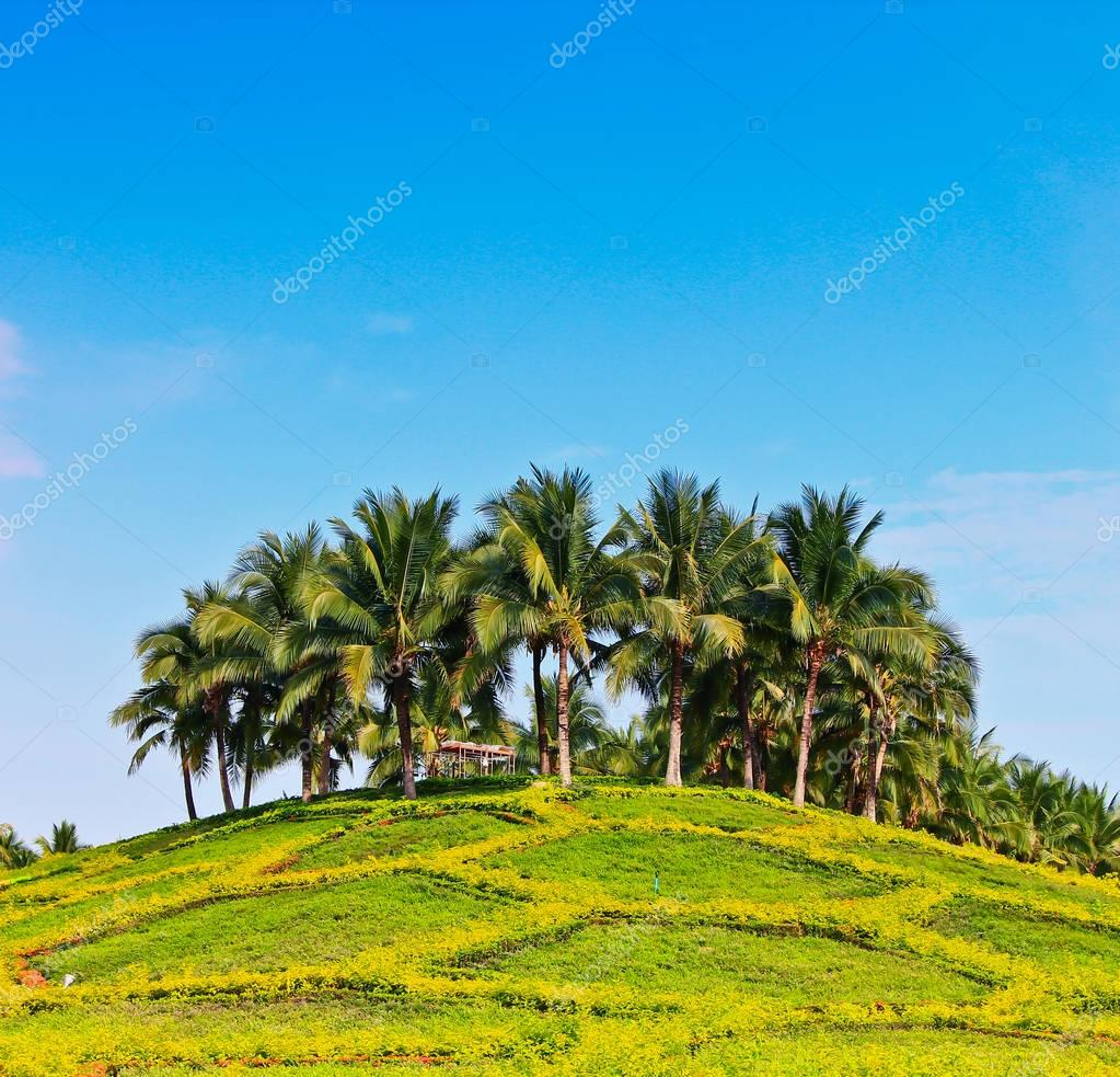 Coconut palms on island