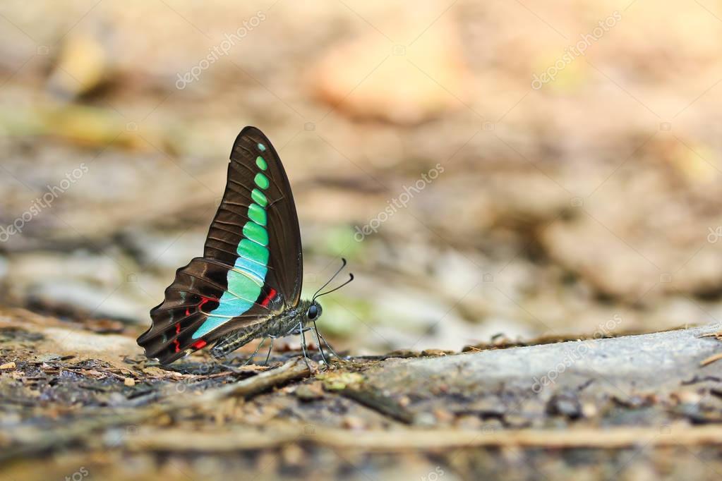 beautiful butterfly on bark of tree