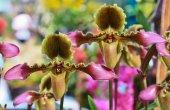 Fotografie Bright  orchid flowers