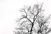 silhouette di albero morto