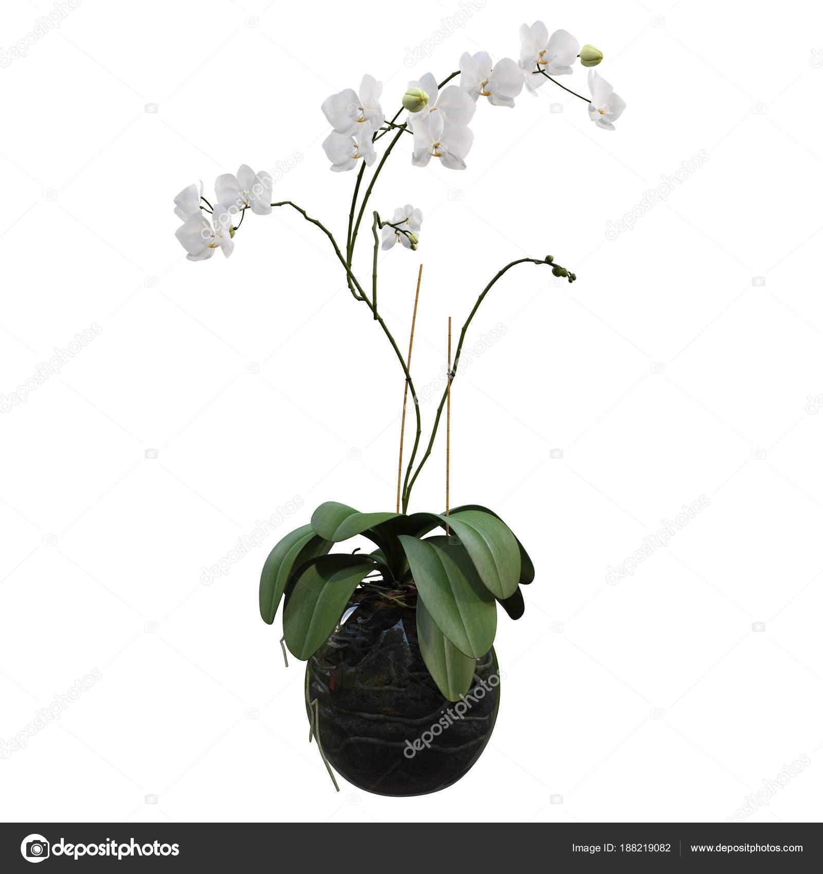 Flowers in pots — Stock © AgneshUladar