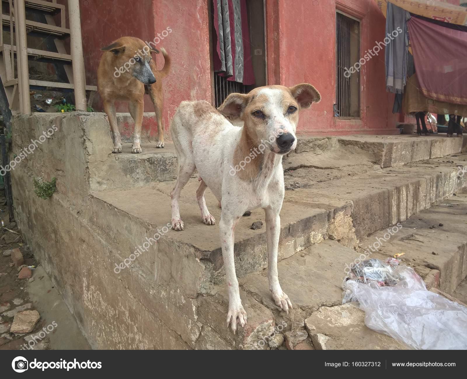 Street dogs of India — Stock Photo © TatyanaBelka #160327312