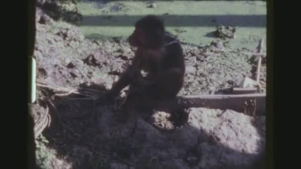 Thajsko, Kanchanaburi, prosinec 1983. Mladá opice, makakové makak s řetězem kolem krku škrábání jeho bradu s jeho nohou