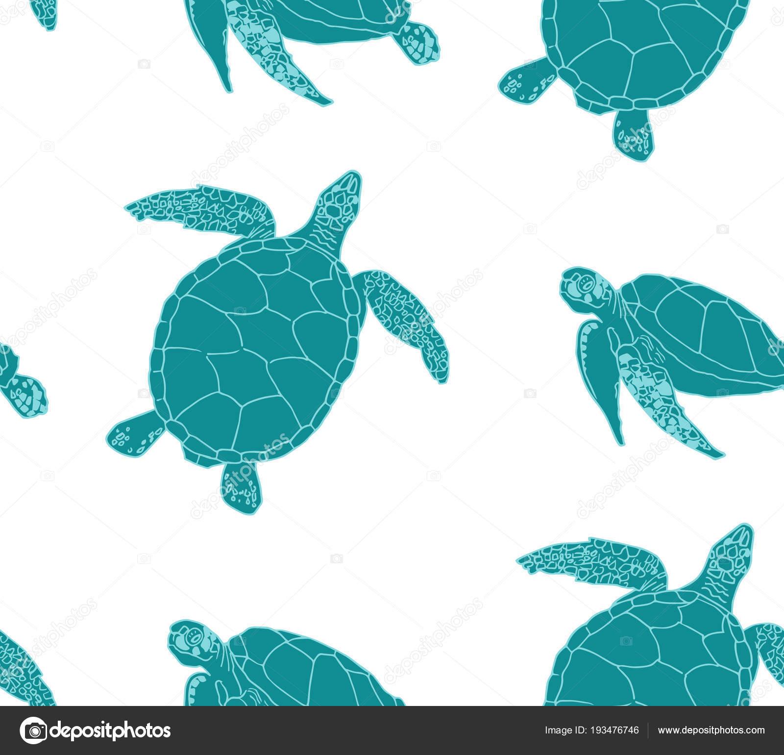 Fondo transparente de las tortugas marinas — Archivo Imágenes ...
