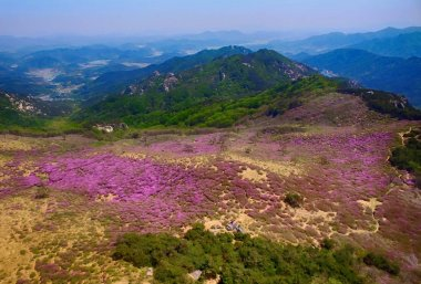 Landscape of Hwangmae Mountain, South Korea, Asia