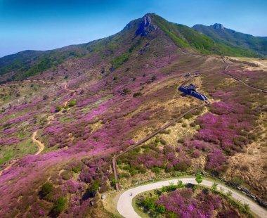 Landscape of Hwangmae Mountain, South Korea, Asia