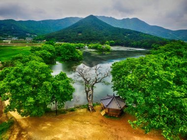 Fringe Tree in Wilyangji Reservoir, Milyang, South Korea, Asia