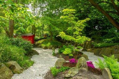 Japanese garden in Leiden botanical garden  dedicating to Famous scientist who studied the flora and fauna of Japan, Philip Franz von Siebold
