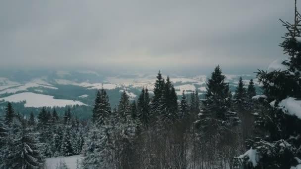 Letecký pohled na zimní hory pokryté piniemi. Hory na zasněžený den, krásy přírody
