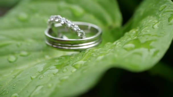 Wedding rings on a green sheet wet after rain. Wedding summer details and accessories close-up. Time before the wedding ceremony in nature. Jewelry made of silver or platinum with diamonds.