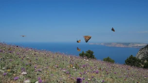 Many orange butterflies fly over lilac flowers and grass against the backdrop of Crimean rocks and the landscape of the sky with the Black Sea. Butterflies fly over the grass in warm spring season.