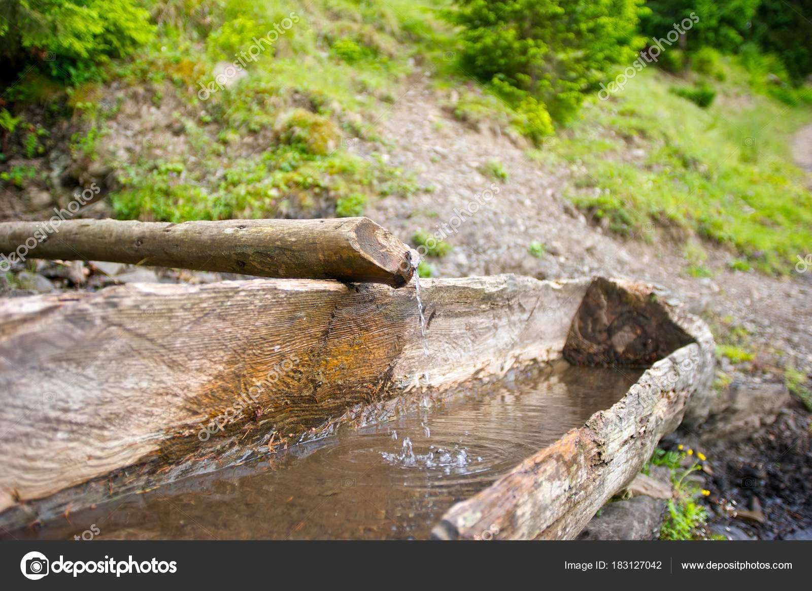 bac eau bois source dans les montagnes herbe verte plantes