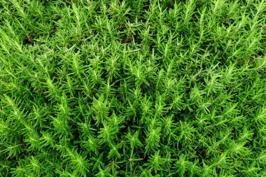 Texture of Green Plant