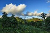 Wandern durch den Dschungel, Seychellen 3