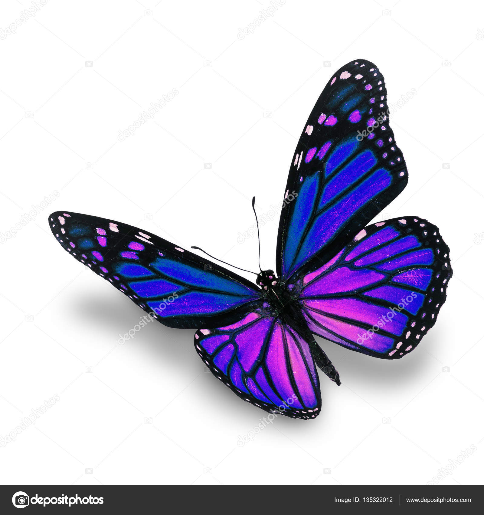 Download Image Pink Butterfly Png Transparent Clip Art Image  Gallery  This Clipart Image Pink Butterfly PNG Transparent Clip Art Image is part of Butterflies PNG  Gallery Yopriceille category