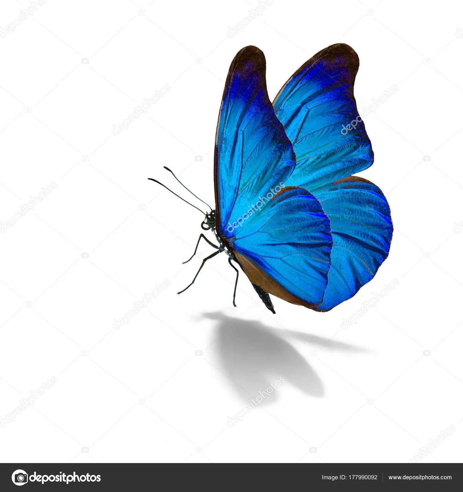 Imágenes Mariposas Bonitas Azules Hermosa Mariposa Azul Foto De