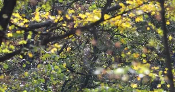 větve ve ve větru v lesích za slunečného podzimního dne se žlutými podzimními listy