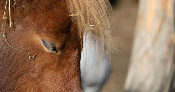 Nahaufnahme Kopf eines Pferdes mit hellbrauner Mähne beim Mittagsschlaf