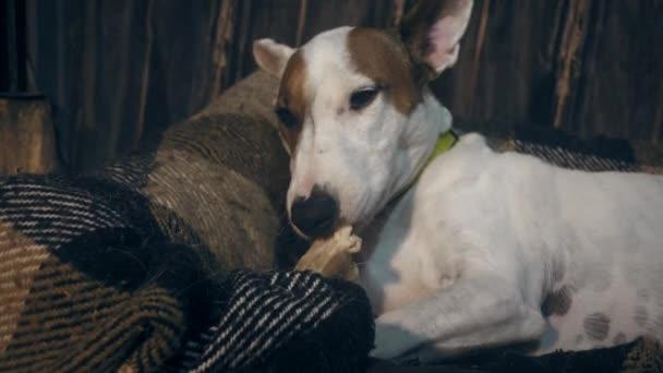 pes jíst kost
