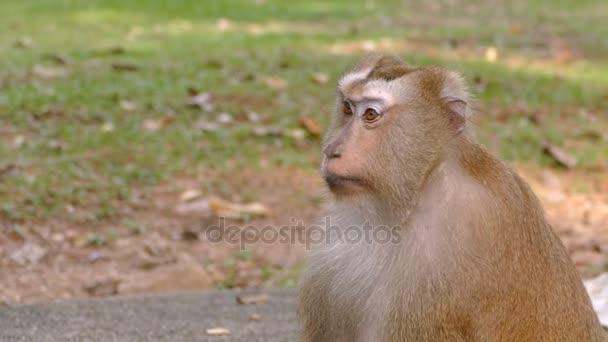 Kíváncsi majom ül a parkban