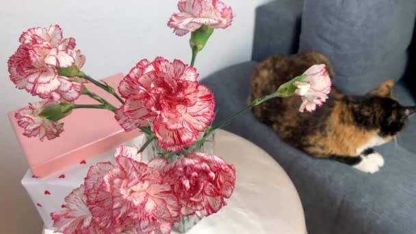 bouquet of pink flowers of carnations is in a vase, gifts in boxes are on a round table, a dark cat is sitting on a gray sofa, the concept is a cozy house