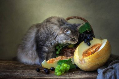 Still life with fruits and melon and curious kitty