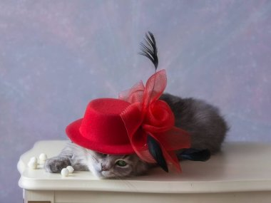 Pretty grey kitty in red bonnet - fashion model